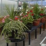 Big Pot Plant